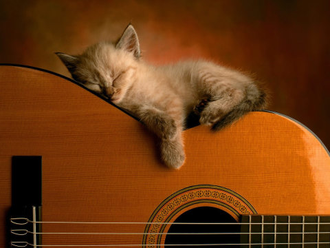 Cat Sleeping On Guitar