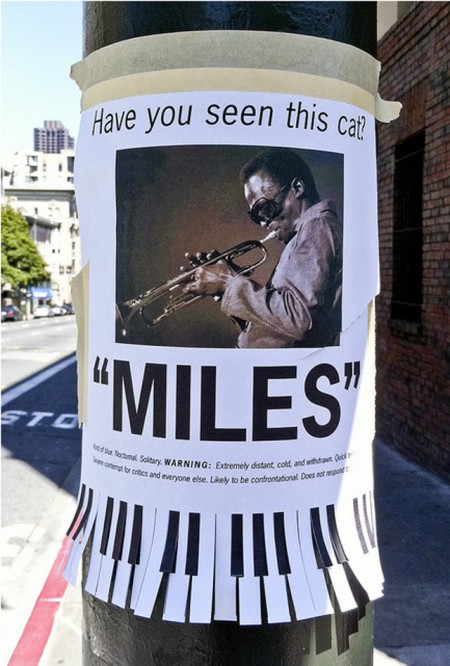 "Have you seen this cat? ""Miles"""